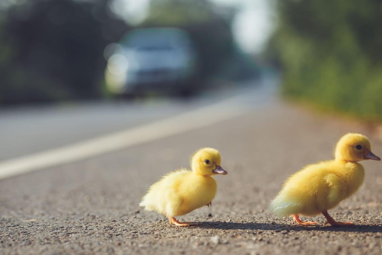 Autoilijoilta vaaditaan nyt erityistä huomiota, kun liikenteessä on paljon pieniä koululaisia. Kuva: 123rf