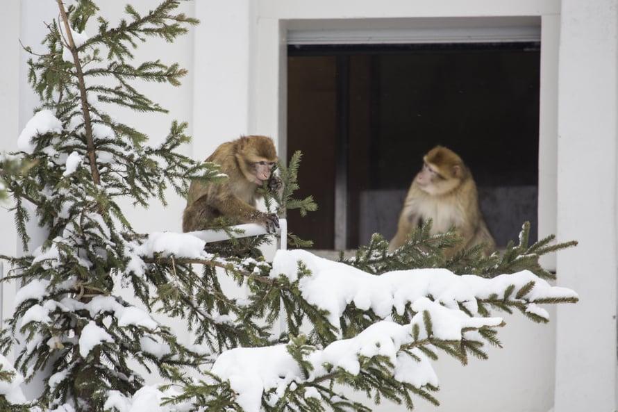 Terkut Korkeasaaren talvesta! Kuva: Korkeasaari