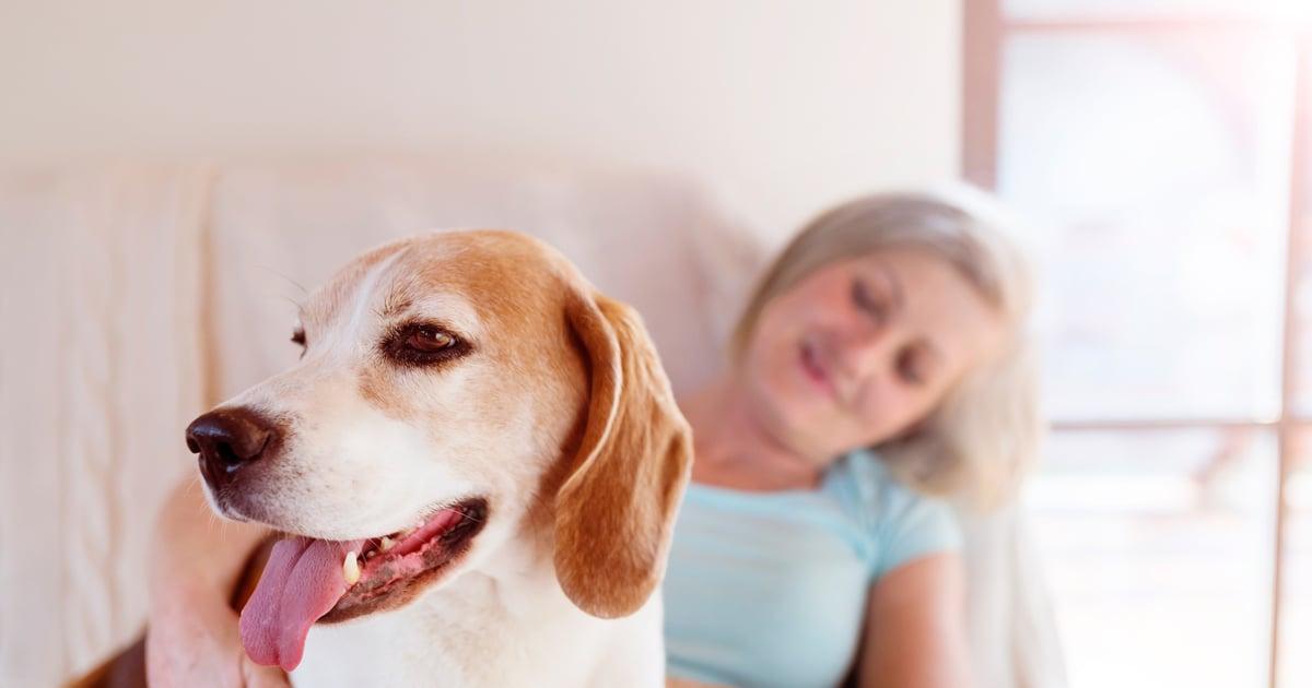 Koira Allergia Siedätys