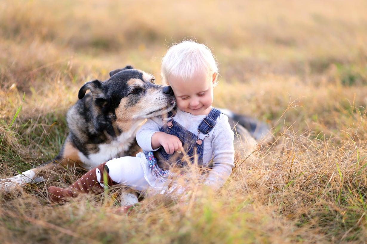 Kun lapsi kasvaa, hänelle kannattaa sanoittaa koiran elekieltä ja opettaa, miten lemmikkiä lähestytään. Kuva: iStock