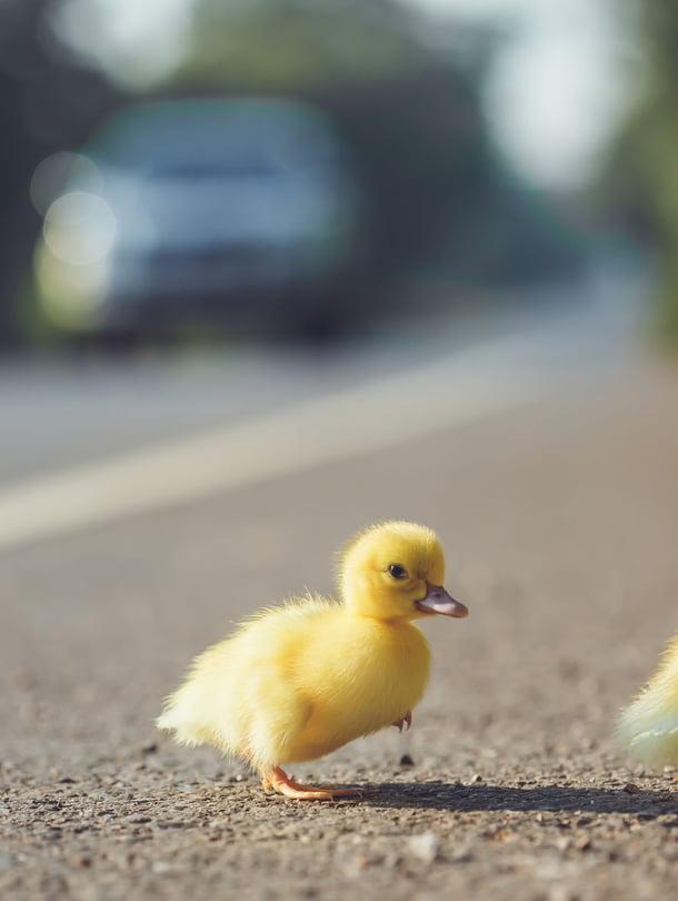 """Autoilijoilta vaaditaan nyt erityistä huomiota, kun liikenteessä on paljon pieniä koululaisia. Kuva: <span class=""""photographer"""">123rf</span>"""