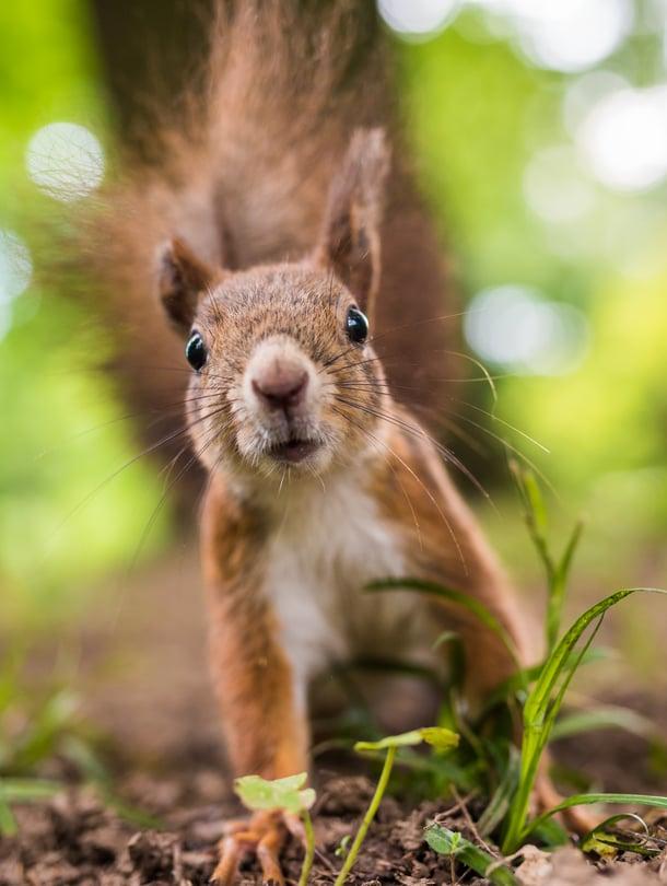 """Aina voi pyytää hätiin vaikka oravan. Kuva: <span class=""""photographer"""">iStockphoto</span>"""