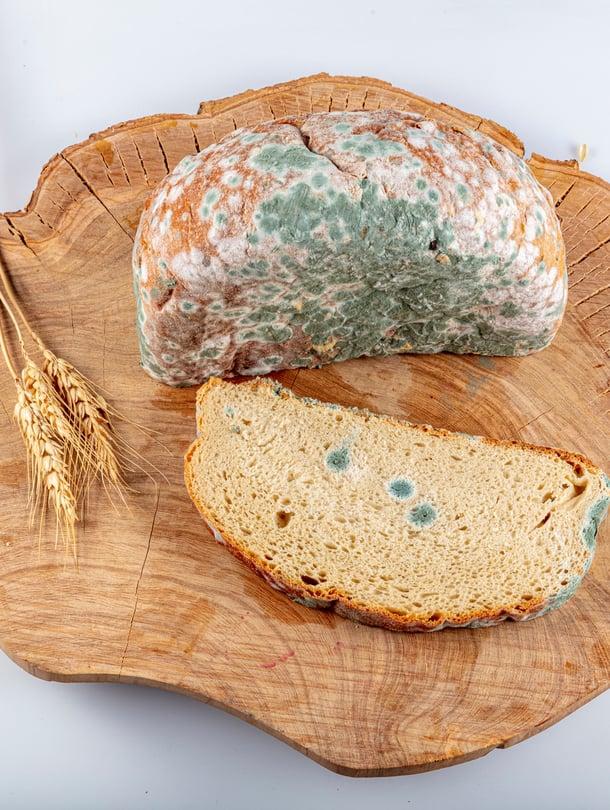 Leivässä näkyvät täplät ovat homeitiöitä, mutta itse home rihmastoineen on silloin jo syvällä.